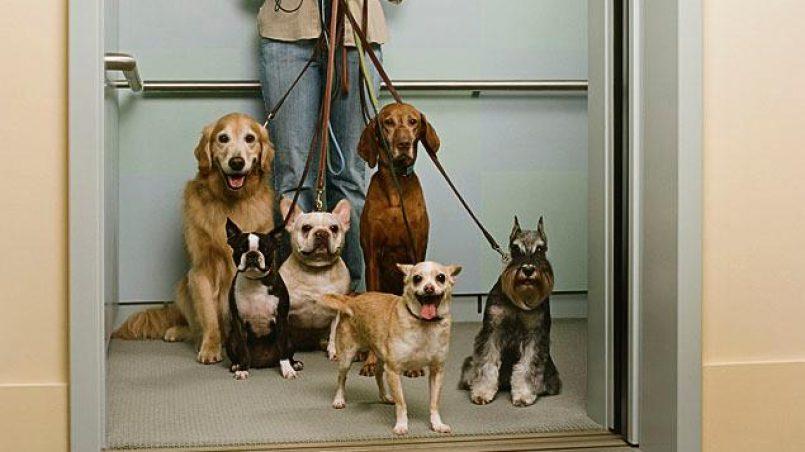 ¿Es recomendable usar el ascensor con tu perro?